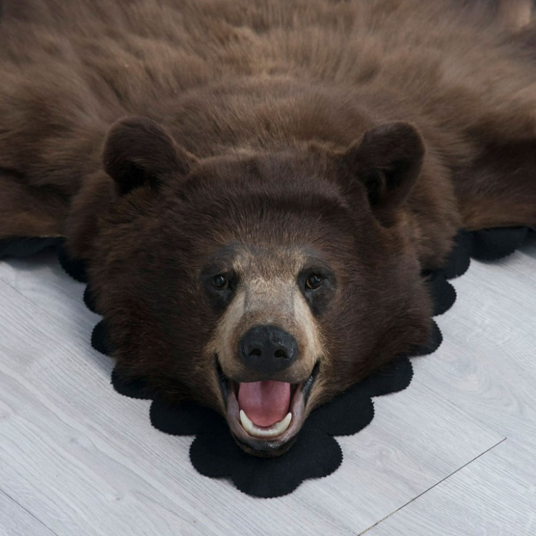4 Feet 11 Inches (150 cm) Brown Bear Rug 18108500168