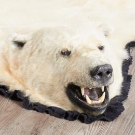 Polar Bear Rugs - Polar Bear Rug for sale